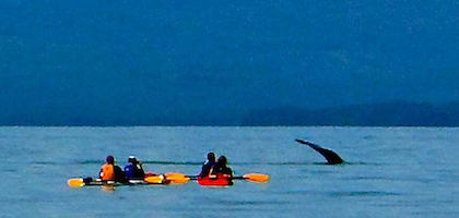 Kayak with Whales Juneau